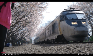 image of a train travelling through Gyeonghwa Station Cherry Blossom Railway