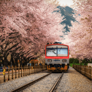 train pulling in to Gyeonghwa station through a blossom tunnel